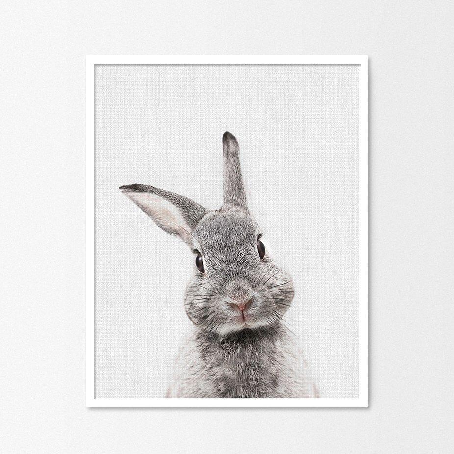 Nursery Decor Nursery Wall Art Bunny Print Animal