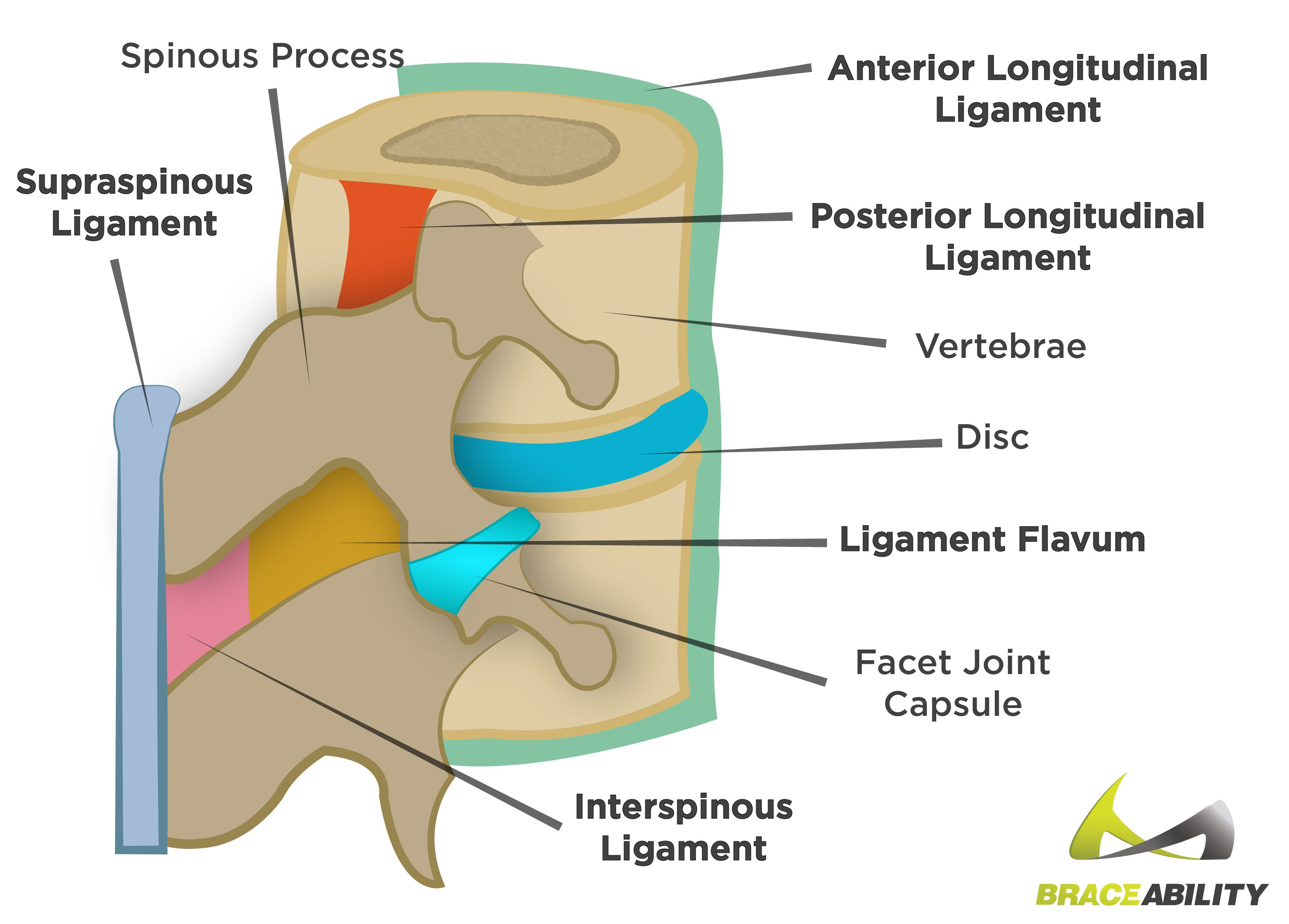 Back Muscle Tear, Pull, or Strain