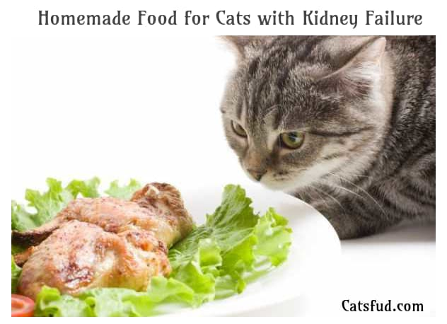 Homemade Food for Cats with Kidney Failure Catsfud in