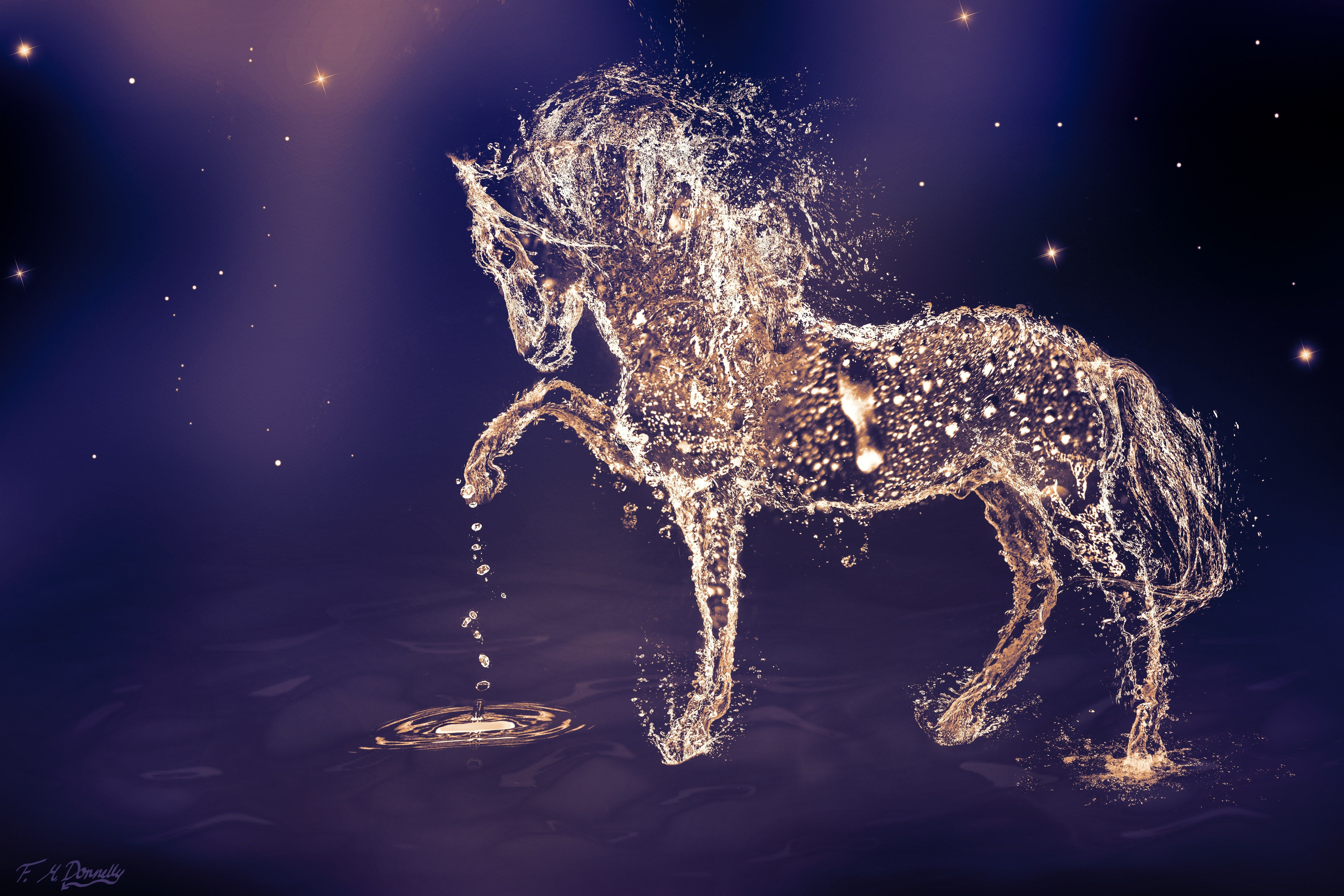Horse Wallpaper Hd Pack Horse Category Fond D Ecran Ordinateur Fond D Ecran Abstrait Fond D Ecran Telephone
