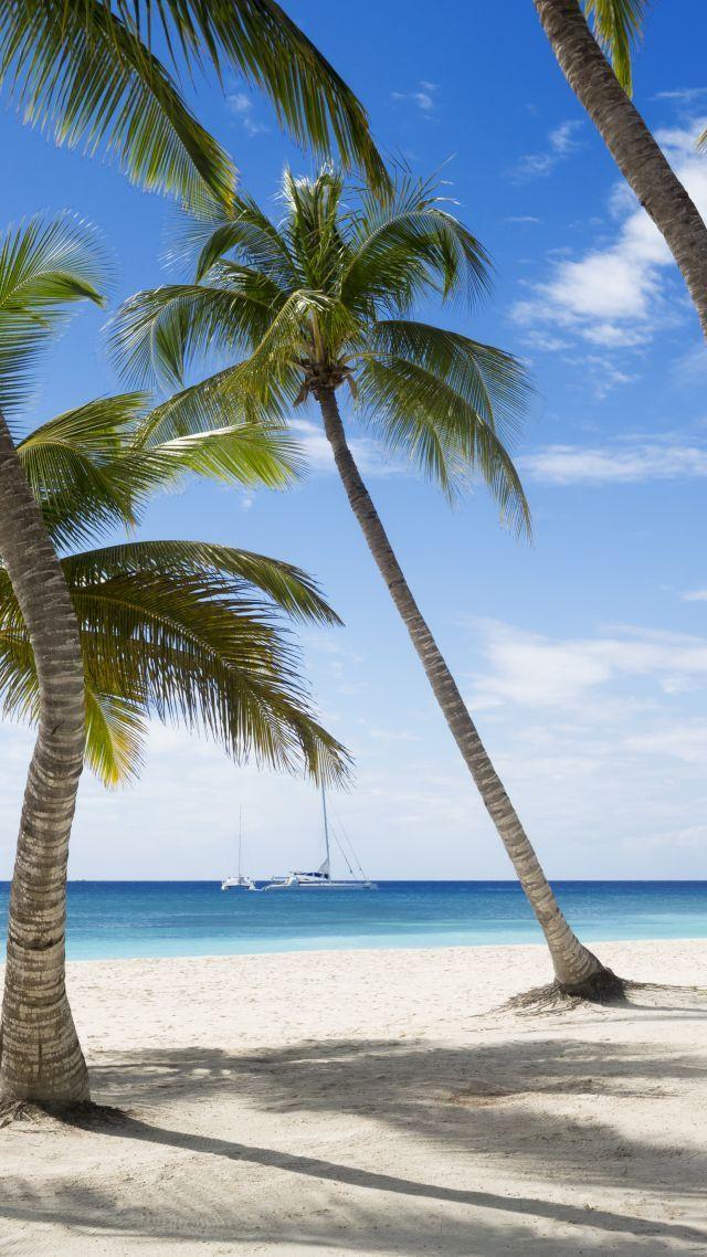 Jamaika, 5k, 4k wallpaper, The Caribbean, beach, palms