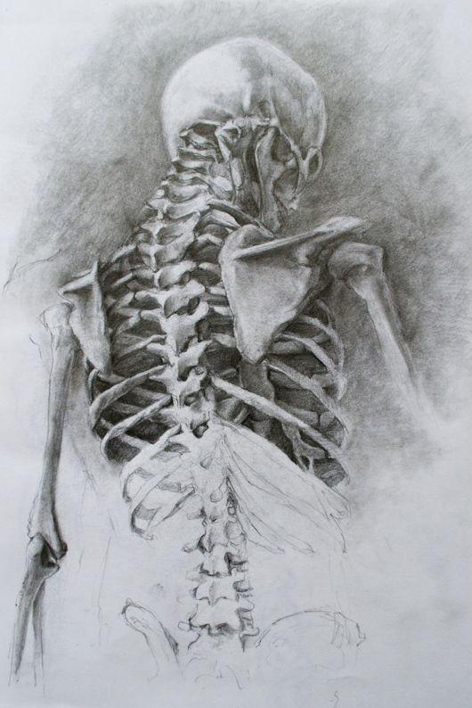 Gato Del Cielo | Anatomia | Pinterest | Cielo, Gato y Anatomía