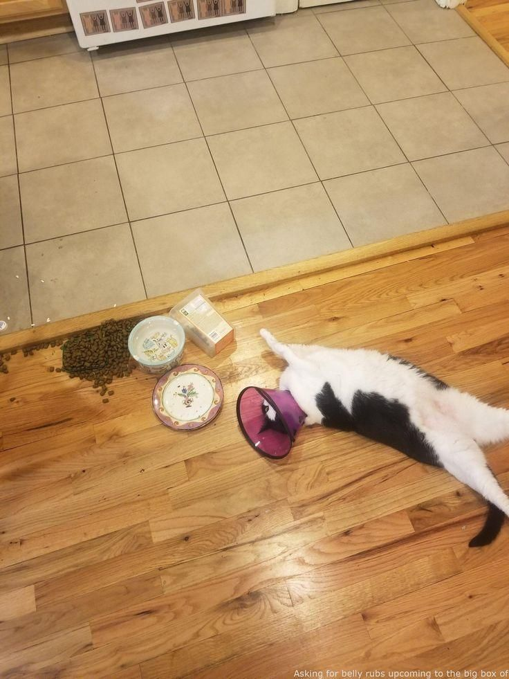 #Animals  - Inquiring for tummy rubs subsequent to the huge box of treats he knocked about – hot  #adorable baby animals cute ,  #animals humor ,  #cute animals kittens ,  #funny animals giffs ,  #furry animals