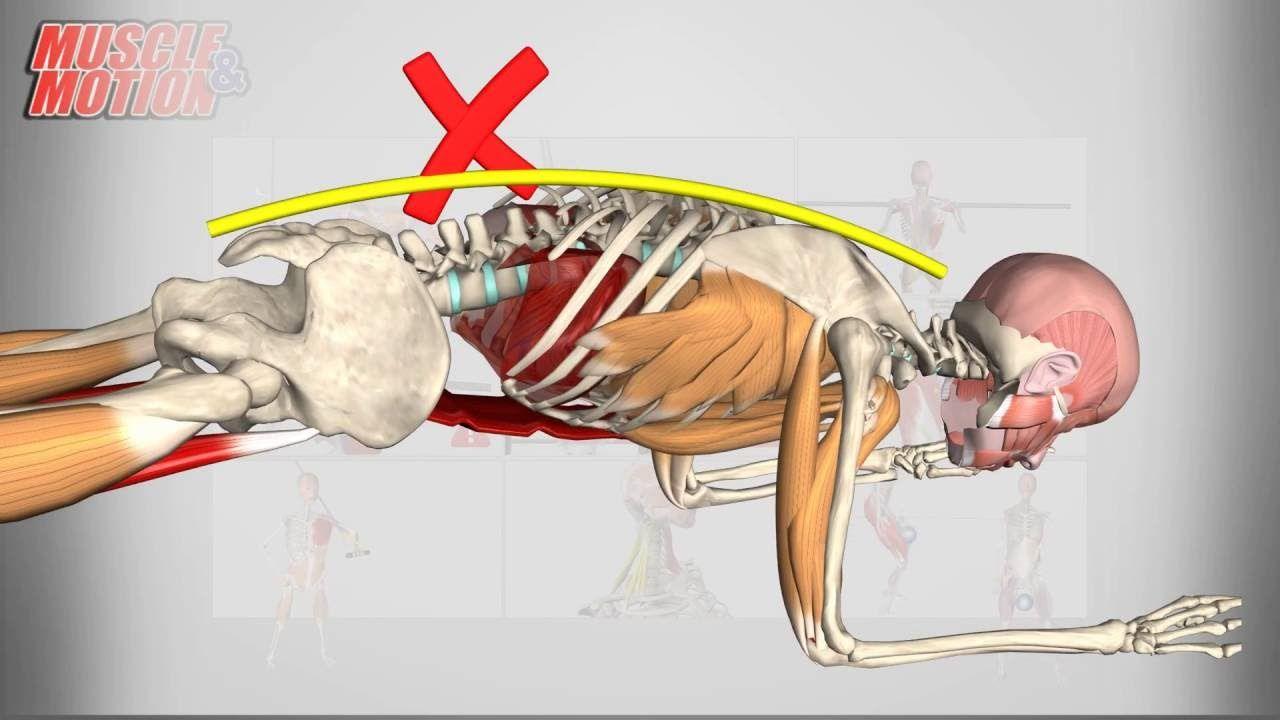 Kettlebell swing anatomy