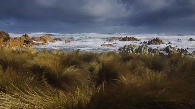 Tasmania's Tarkine - one of the world's greatest wilderness areas