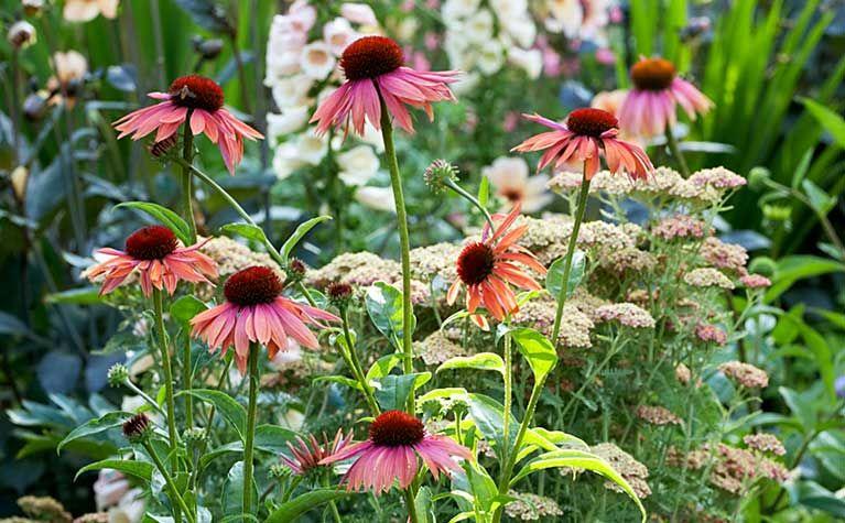 Balkon Und Terrasse Ratgeber Wissenswertes Finden Sie Bei Obi Garten Garten Anlegen Gartengestaltung