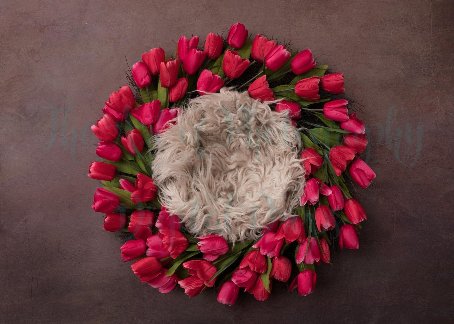 Newborn Baby Digital Backdrop, Pink Tulip Photography
