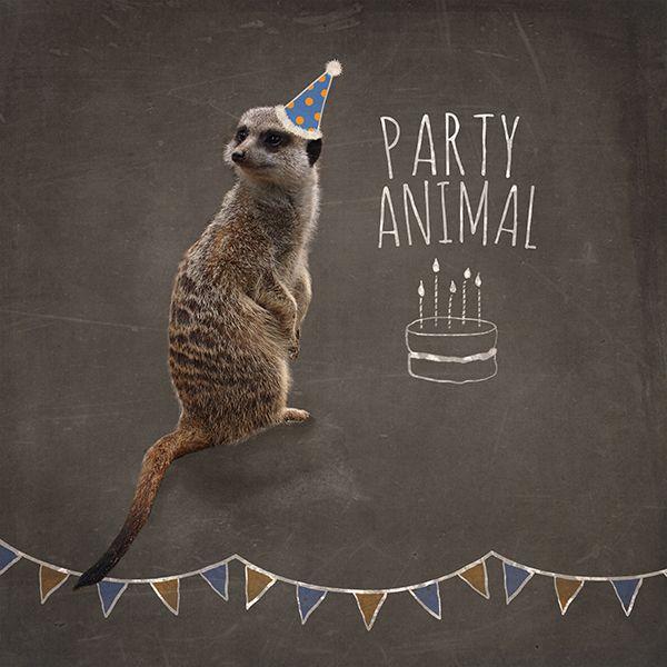Meerkat Chalkboard Birthday Card By Martha Bowyer Design