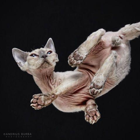 Incrível! Fotógrafo retrata animais vistos de baixo em ensaio divertido | Virgula