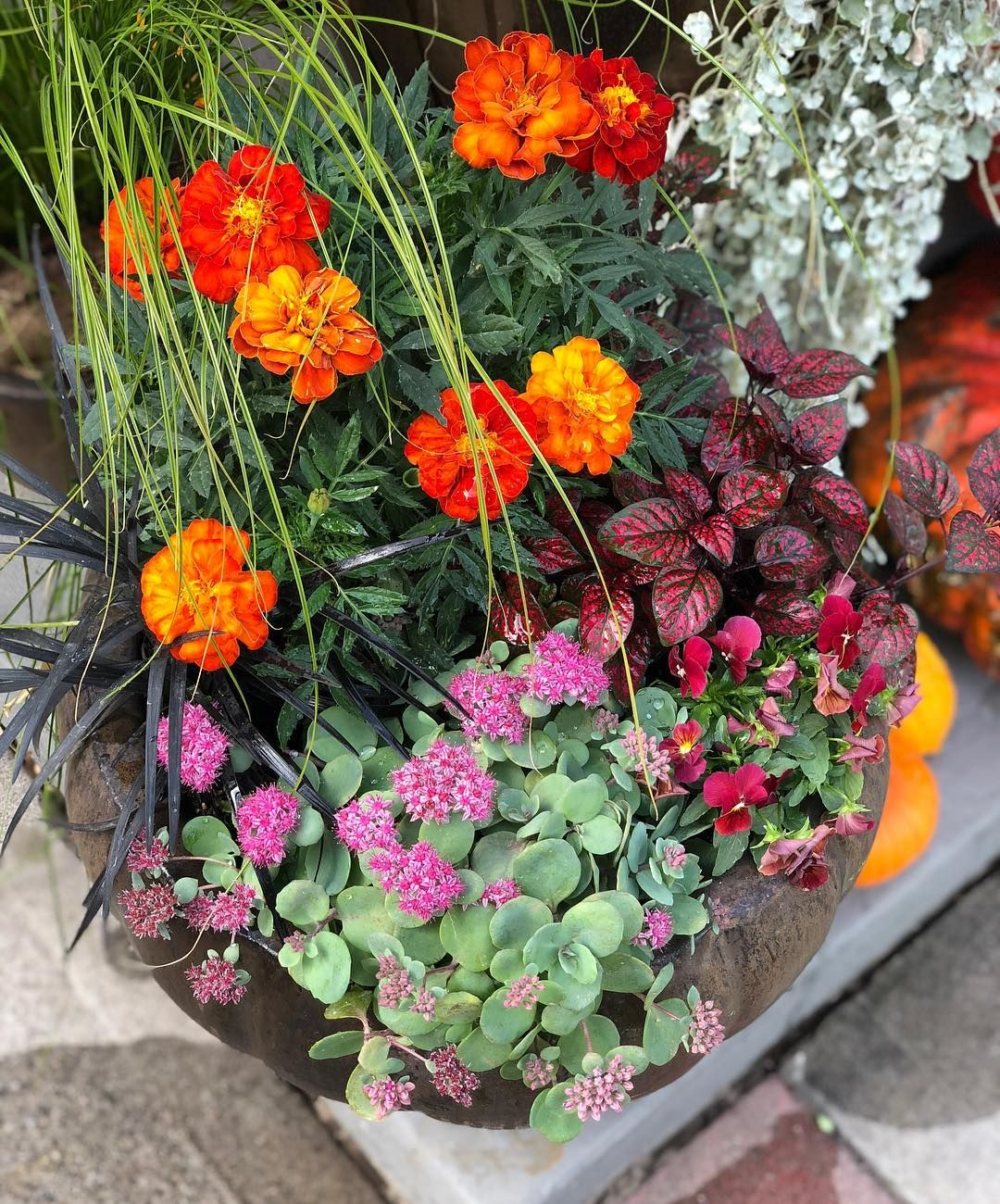 Fall Containers, Garden, Plants