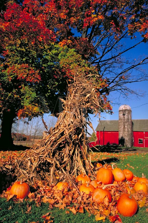Pumpkins & corn stalks decor. Add indian corn, colored