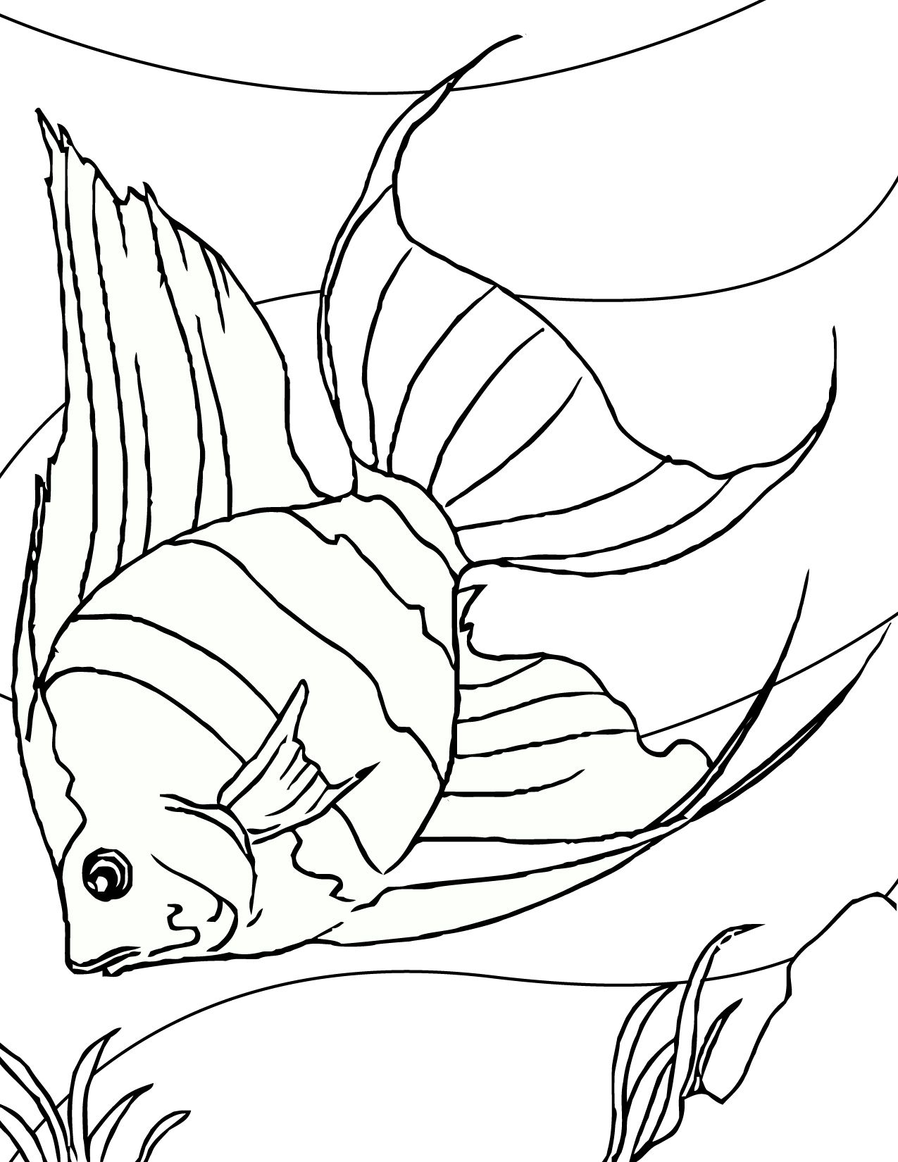 angel fish coloring page print out coloring pages - Printable Fish Coloring Pages