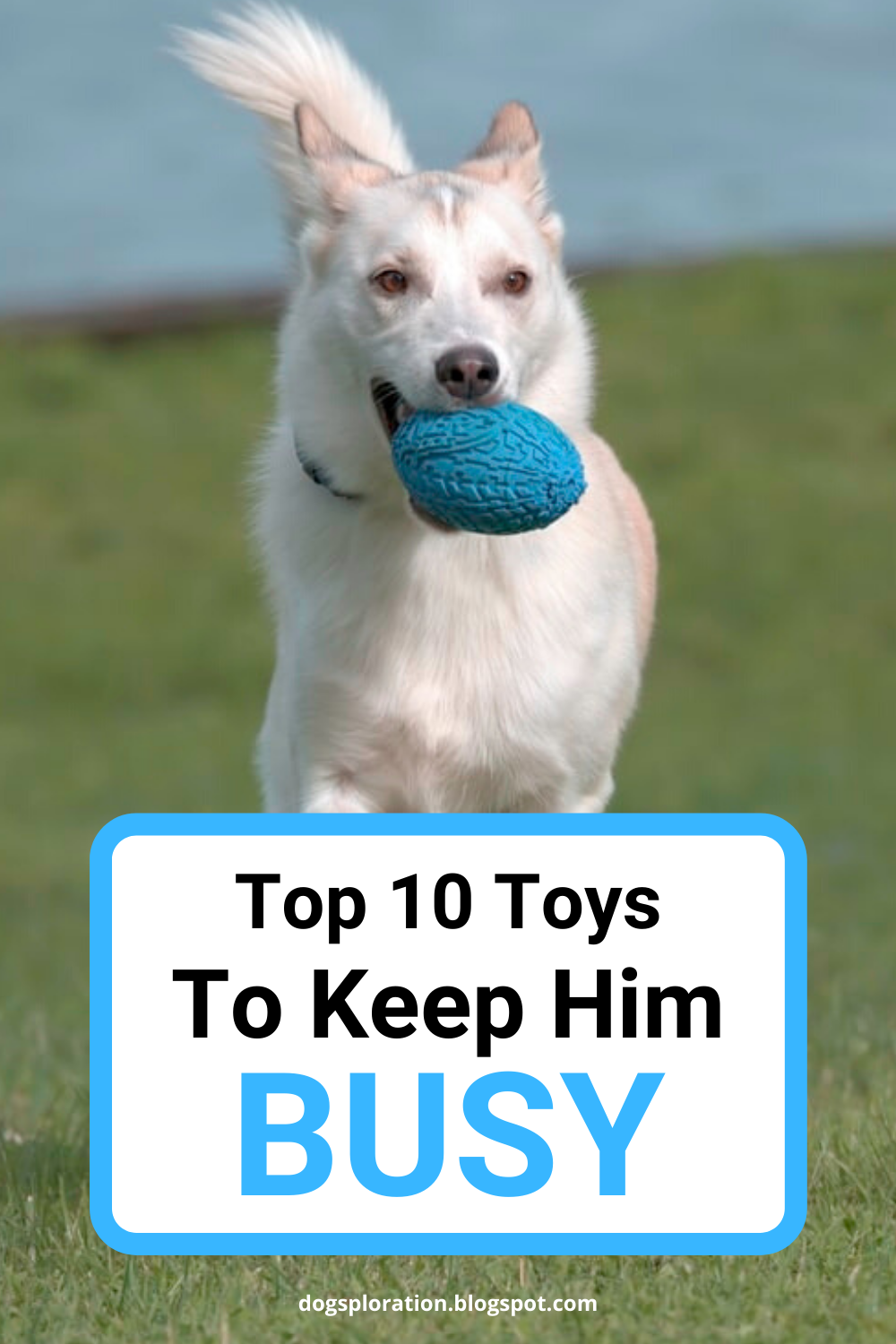 10 Best Toys To Keep Your Dog Busy 2020 In 2020 Stimulating Dog Toys Best Dog Toys Dogs