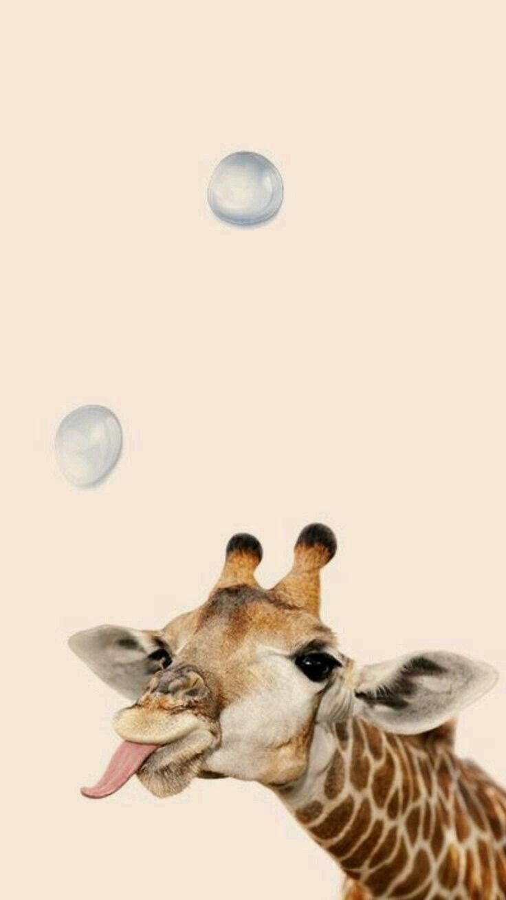 Hermosa Jirafa In 2019 Cute Animals Bubbles Wallpaper