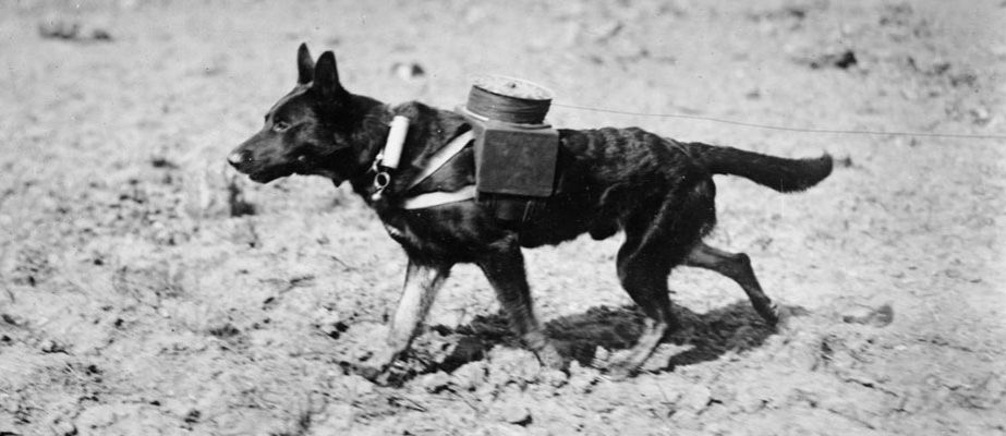 A German War Dog Fitted With Apparatus For Laying