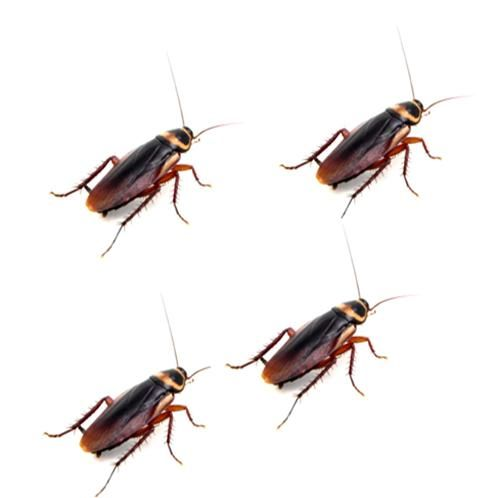 How To Get Rid Of Palmetto Bugs #stepbystep