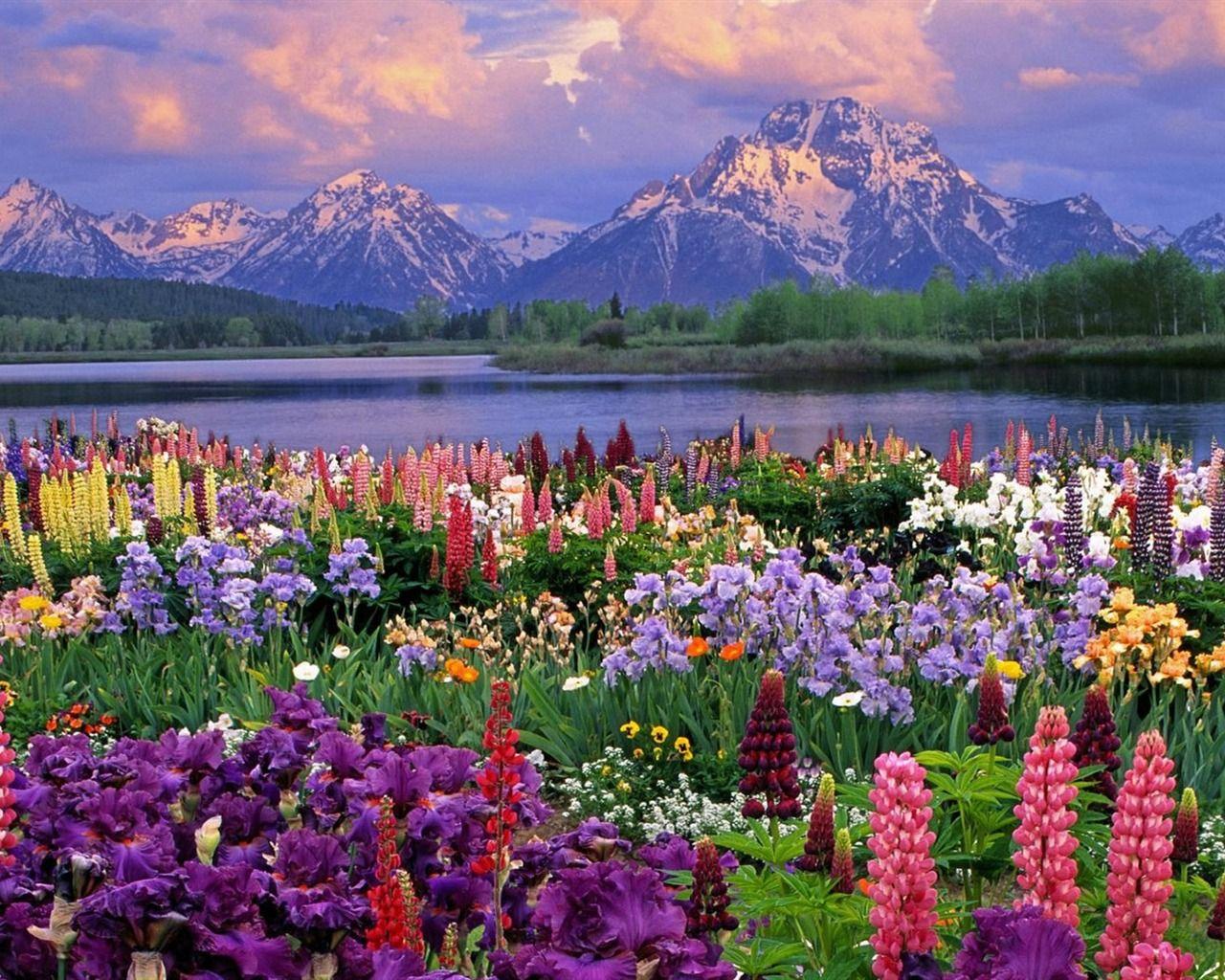 Bildergebnis für beautiful flowers in September