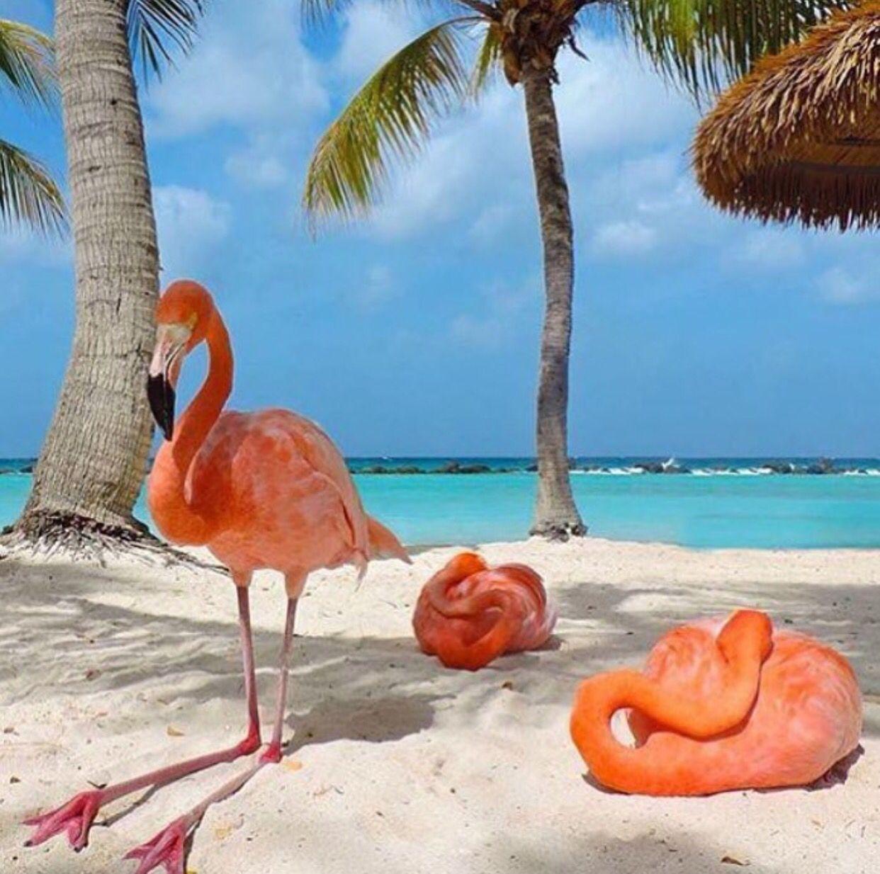 Resultado de imagen de bahamas flamencos