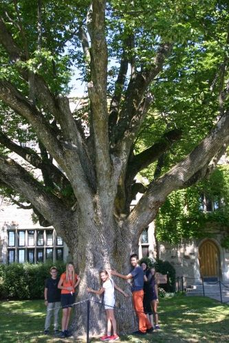 Ash tree in front of Boulden House
