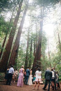 Muir Woods Wedding Photography