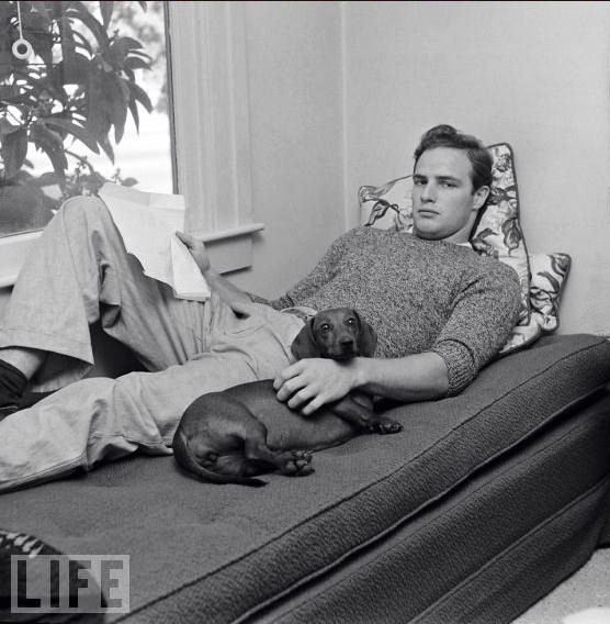 We Couldn T Resist Posting This Famous Dachshunds Owners Marlon