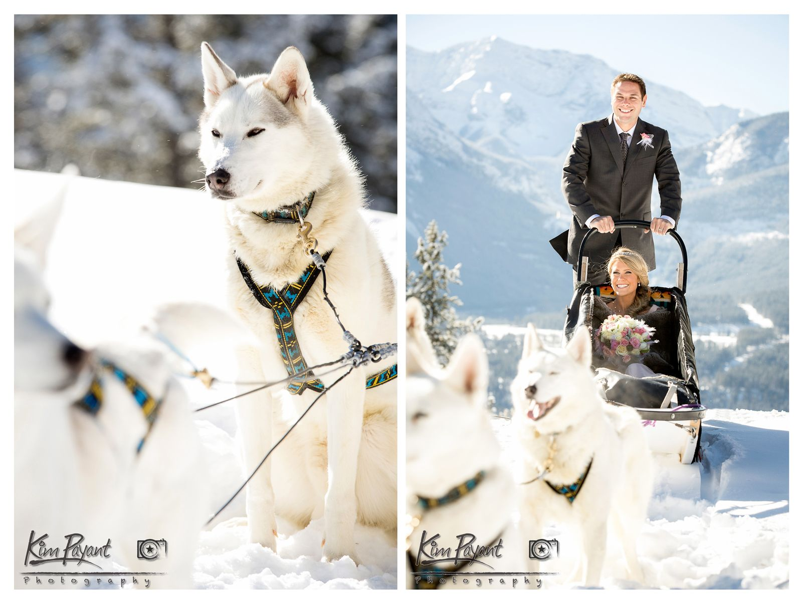 Winter wedding Styled Shoot, Snowy Owl Themed Style Shoot, Canmore ...