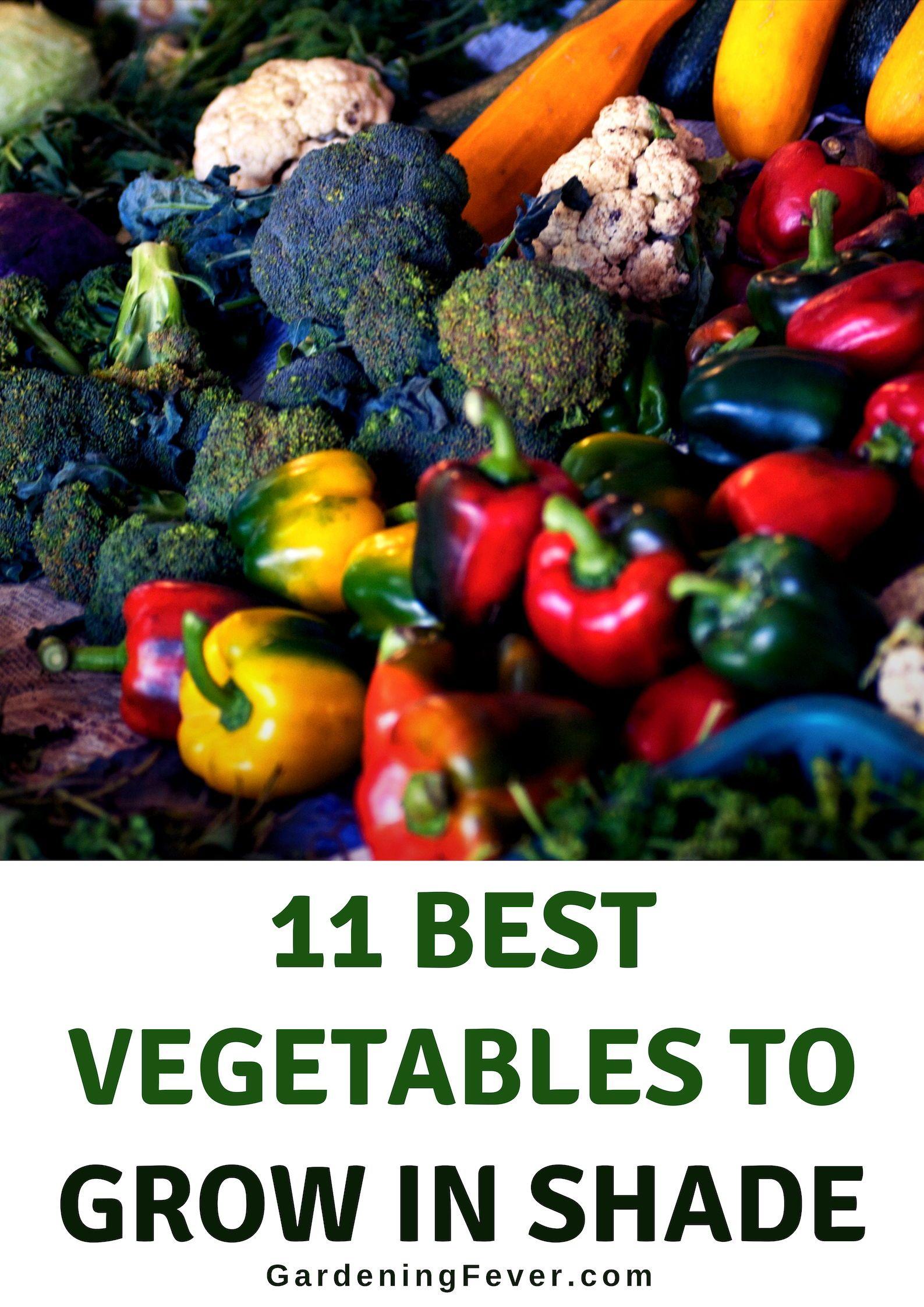 11 Best Vegetables To Grow In Shade Growing Vegetables 400 x 300