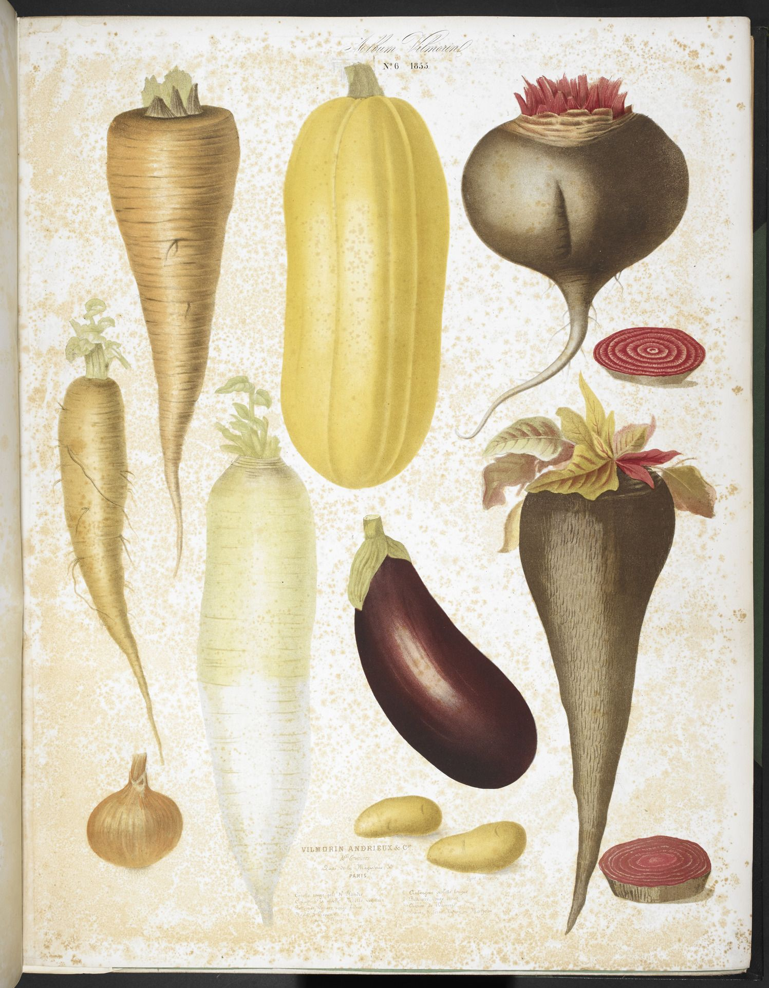 """Caption: """"A selection of vegetables, including aubergine, onion, carrot, and potato."""" Album Vilmorin: 68 Coloured plates of vegetables and flowers, printed by E. Champin and M. Coutance, Paris 1850."""