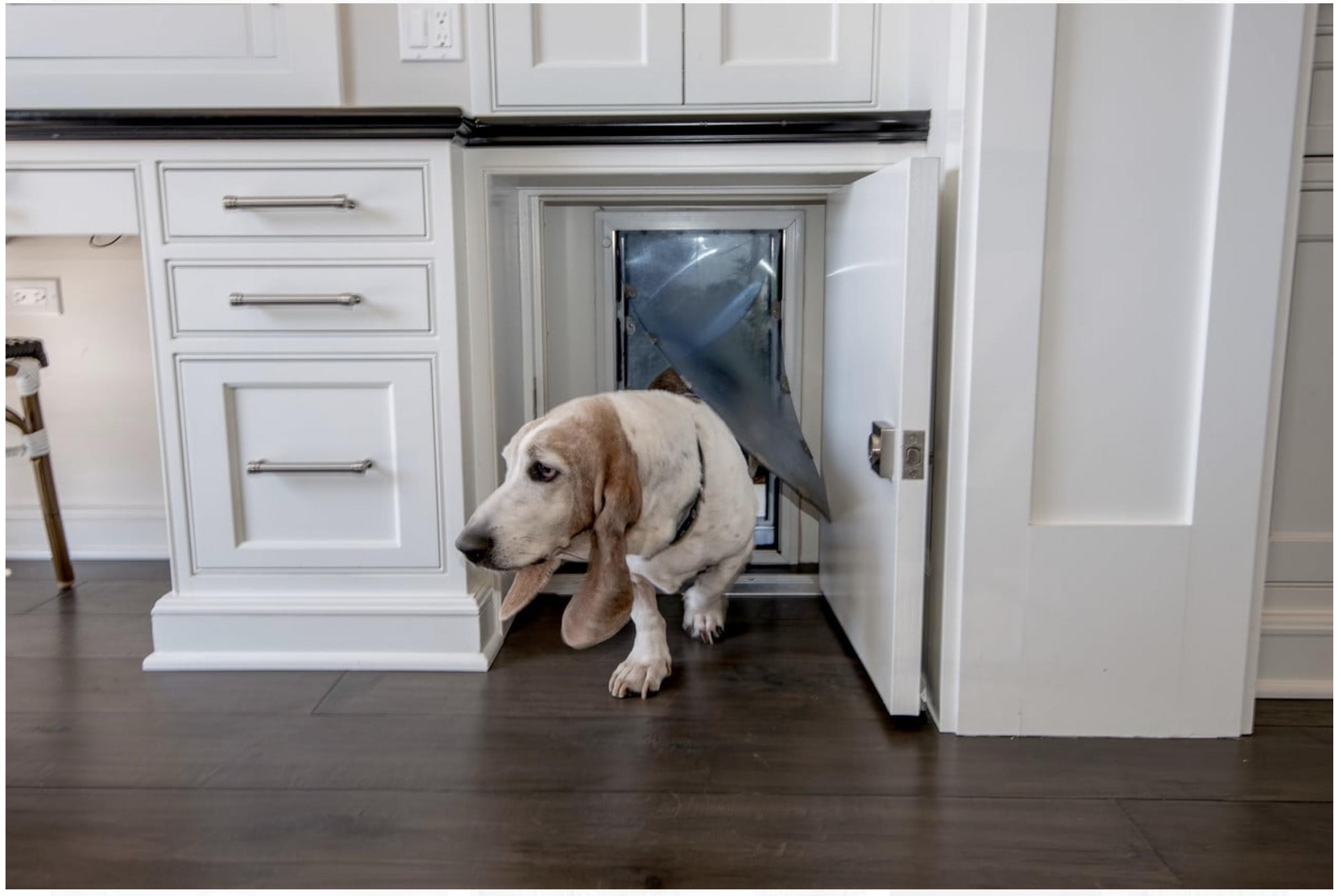 Under The Counter Lockable Dog Door Dog Spaces Dog Houses Dog Door