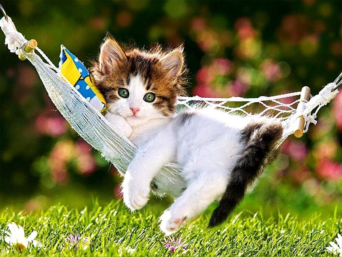 Cute Kitten Compilation Funny Cat Videos Youtube Funny Animal Videos Kittens Cutest Funny Cute Cats Cute Cat Wallpaper