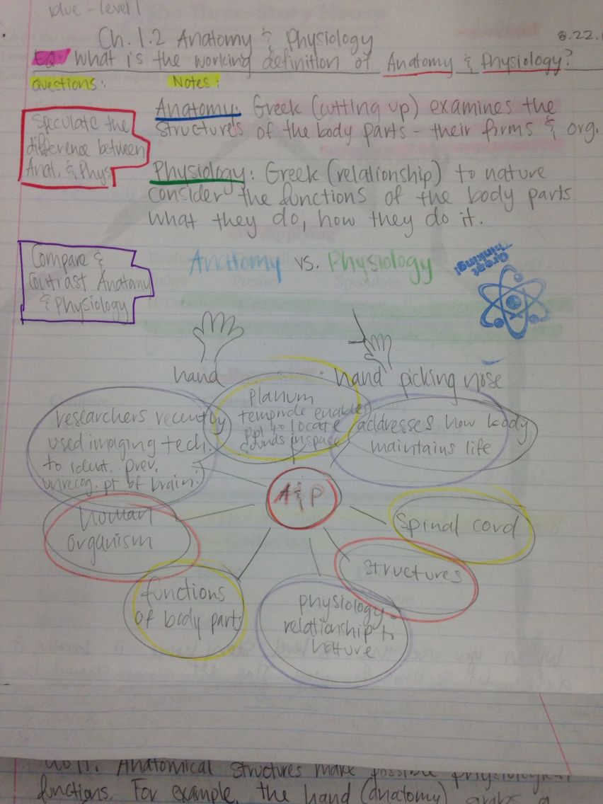 Good use of a graphic organizer in Cornell notes. | Ch.1.2: Anatomy ...