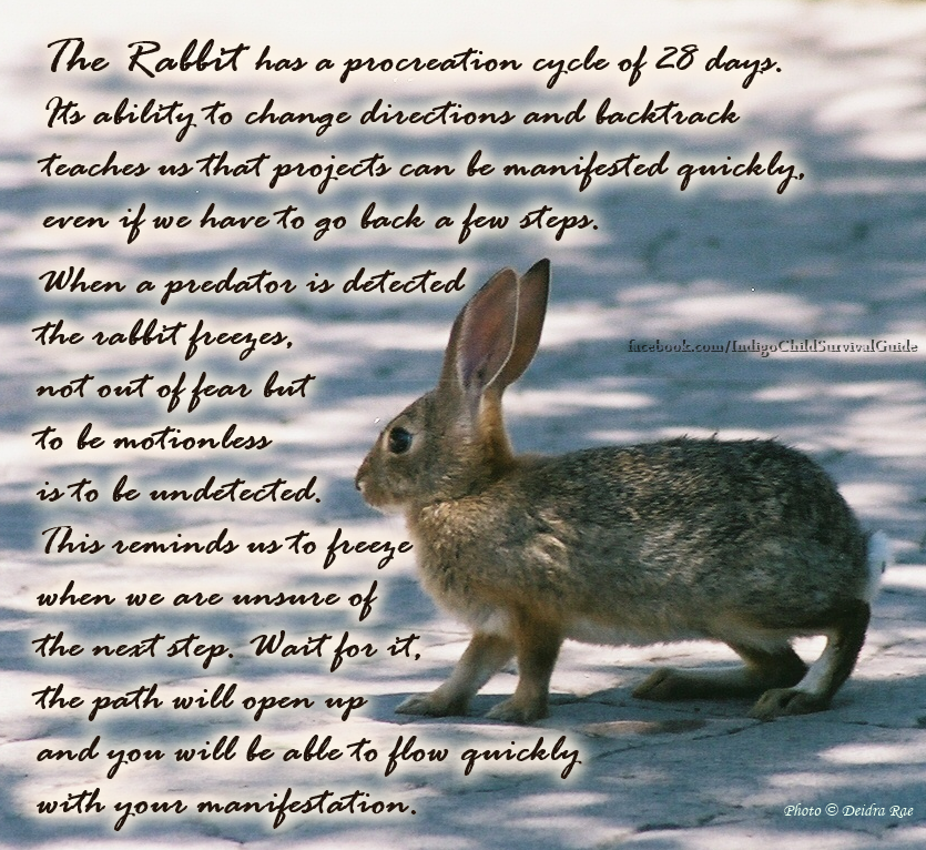 The Rabbit Teaches To Tune In To The Surroundings Retrace Steps