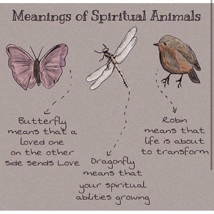 Pin By Ldynes7 On Life Spiritual Animal Spirit Animal Totem Dragonfly Meaning Spiritual