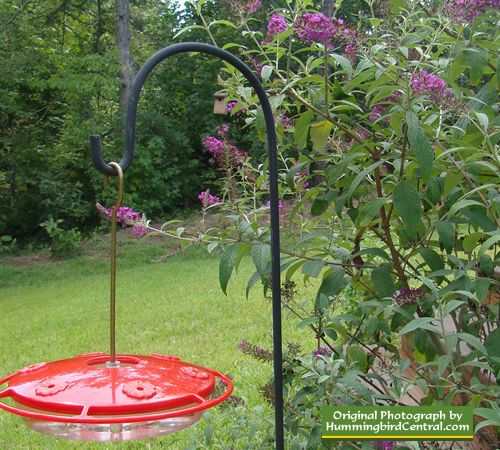 Captivating Gardens · Hummingbird Feeder Nestled In A Butterfly ...