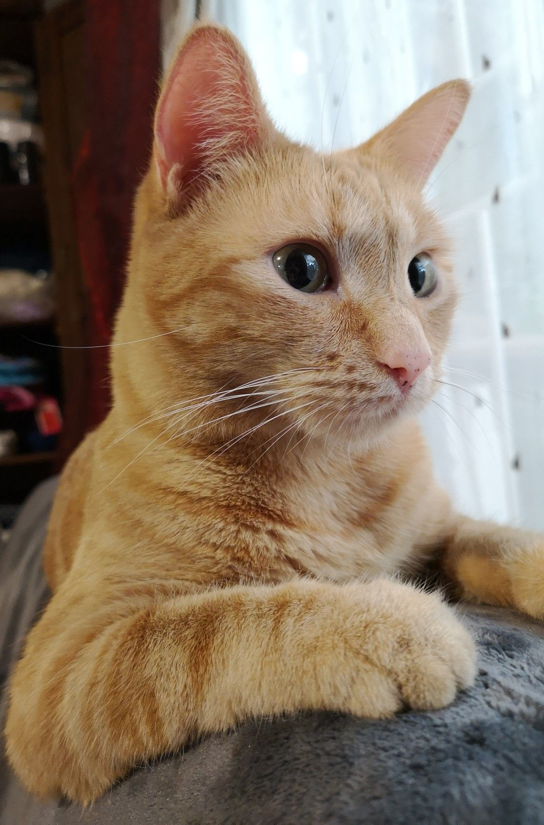 Eager ginger...... Orange tabby cats, Pretty cats, Cute