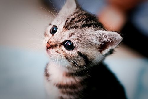 I wantt da kitttty