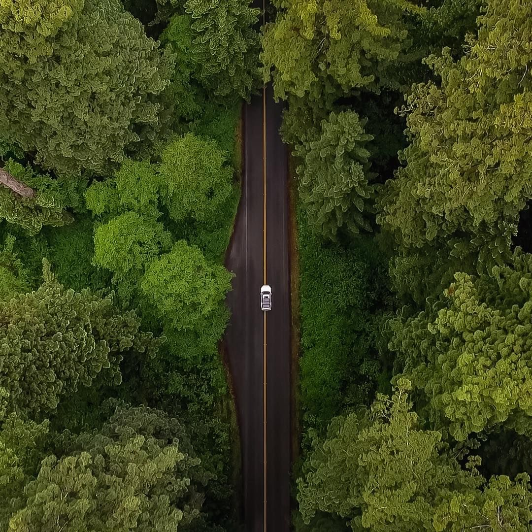 From Where I Drone On Instagram A Secret Forest Somewhere In California Photo By Mssdeleon Fromwhereidrone Drone Photography Drone Photos Aerial Shot