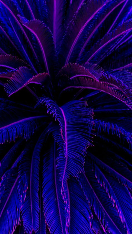 Blue Purple Electric Blue Violet Fractal Art Plant Iphone Wallpaper Black And Blue Wallpaper Blue Wallpaper Iphone Black And Purple Wallpaper