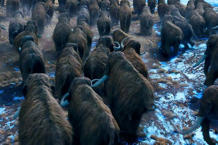 A herd of migrating Woolly Mammoth from the movie 10,000 BC