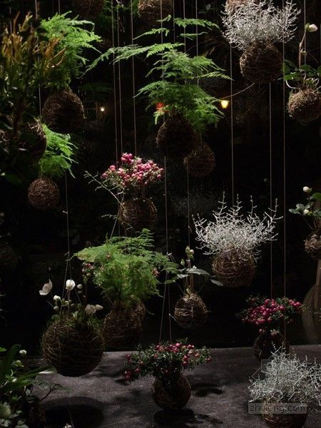 Kokedama, or hanging plant gardens are so awesome![media_id:2962103]