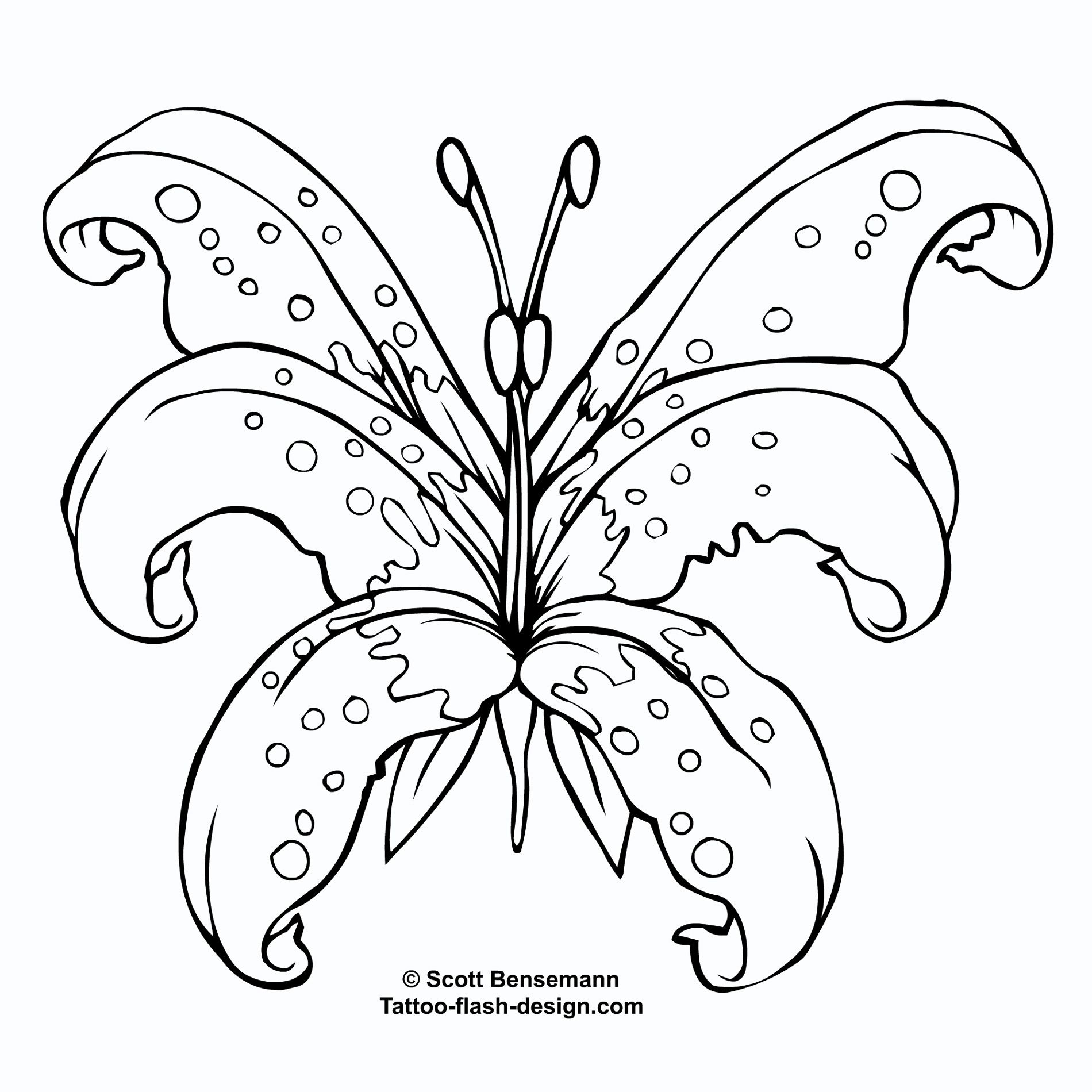 orchid tattoo stencil tattoo supplies tattoo ideas tattoo making supplies. Black Bedroom Furniture Sets. Home Design Ideas