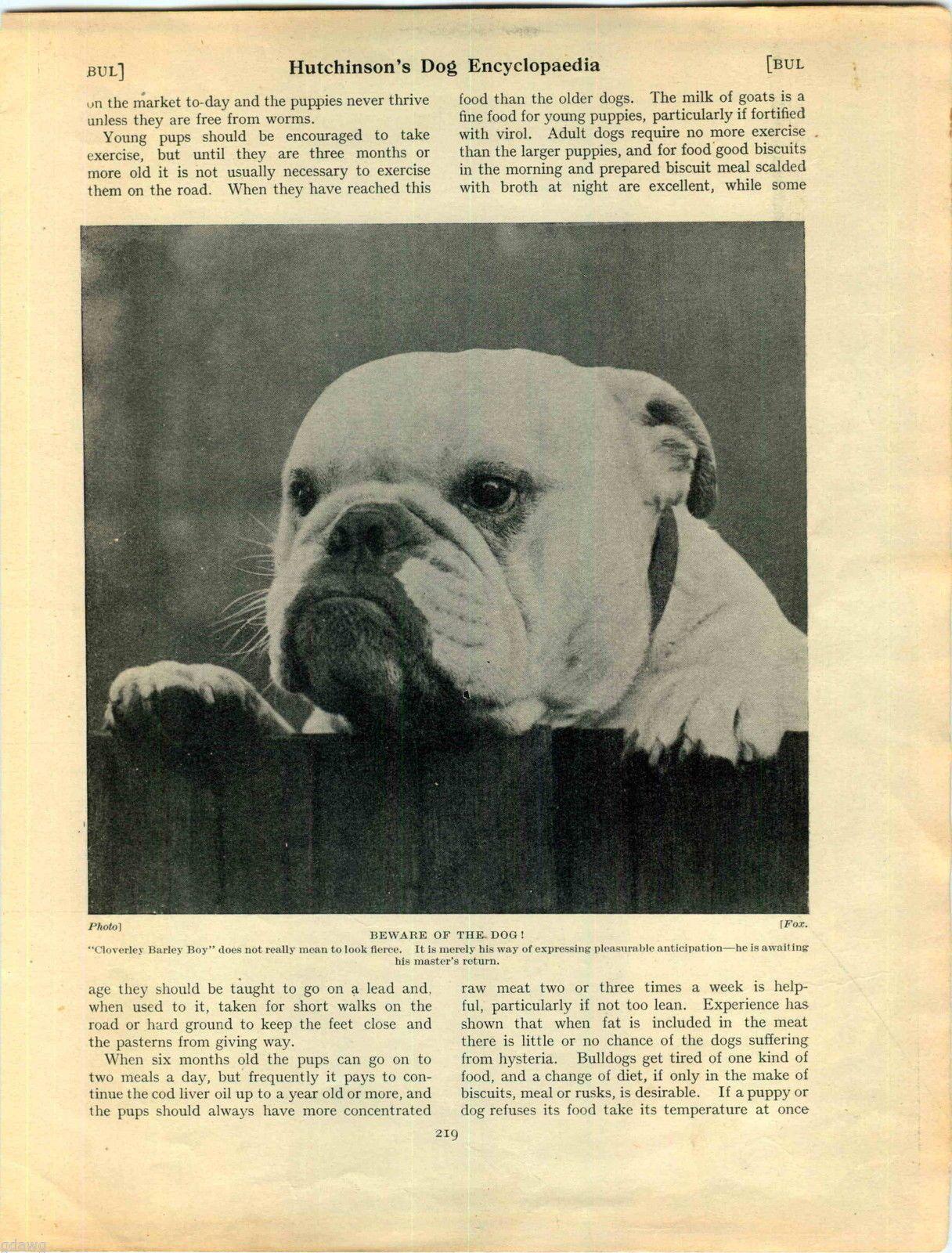 1930 Book Plate Print Bulldog Cloverley Barley Boy Juvenile Puppie ...