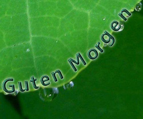 morgääään - http://guten-morgen-bilder.de/bilder/morgaeaeaeaen-70/