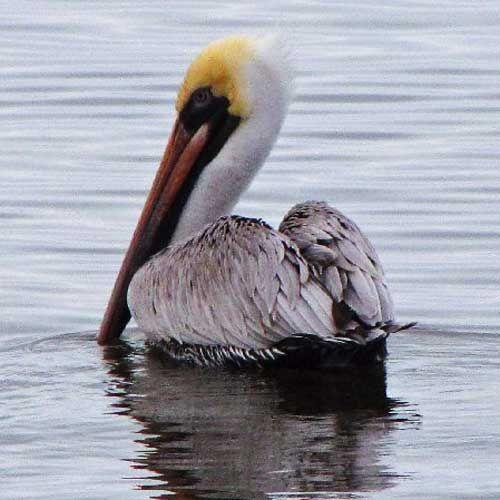 I LOVE this place too!! Birding on Alabama's Gulf Coast, Gulf Shores, Orange Beach, AL