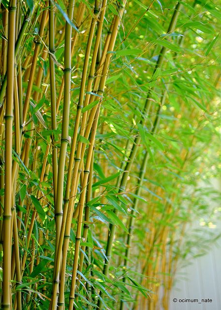 Yellow Groove Bamboo Dslr Background Images Desktop Background