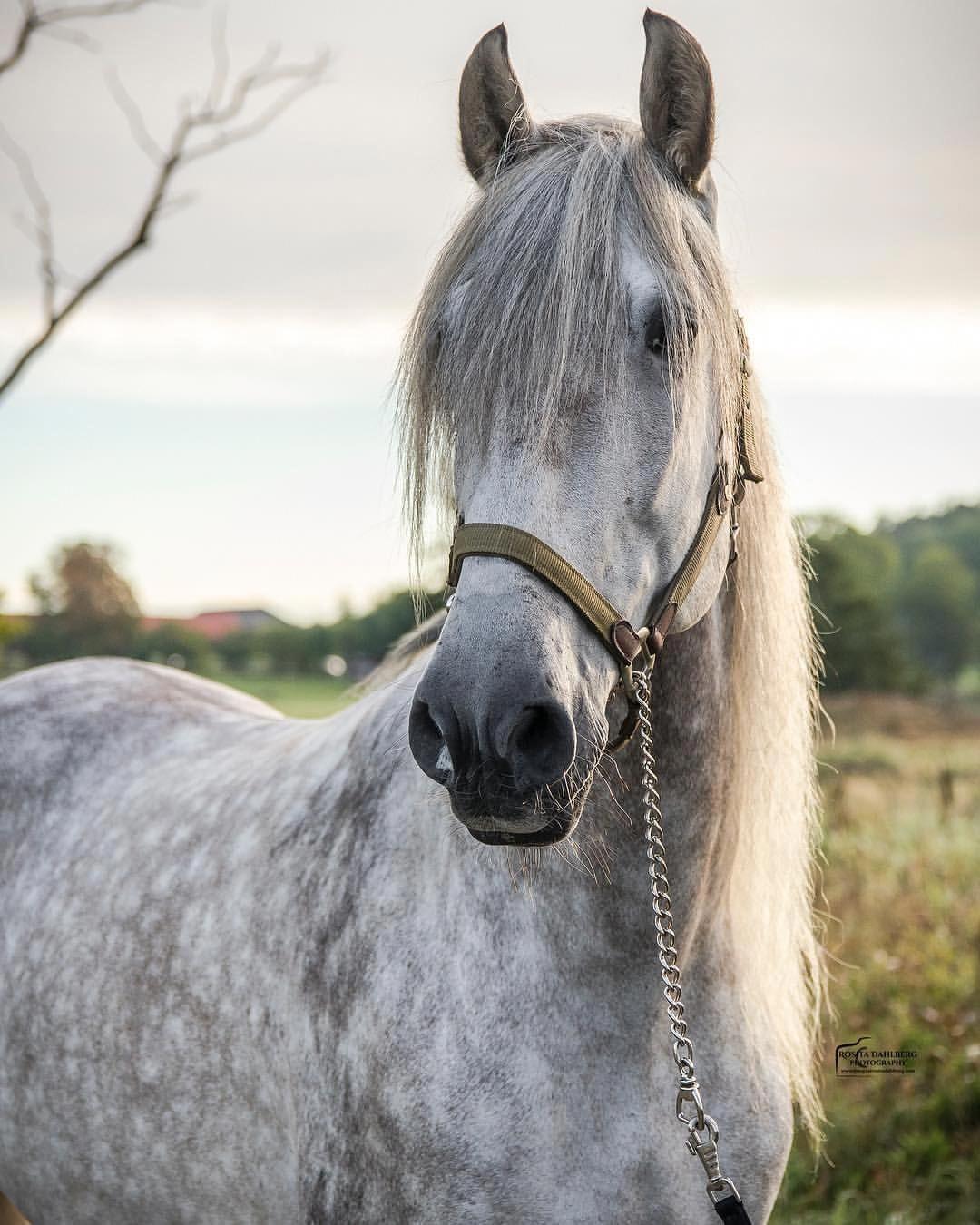 Kicked In The Head The Equestrian Helmet Horse Breeds Horses Pretty Horses