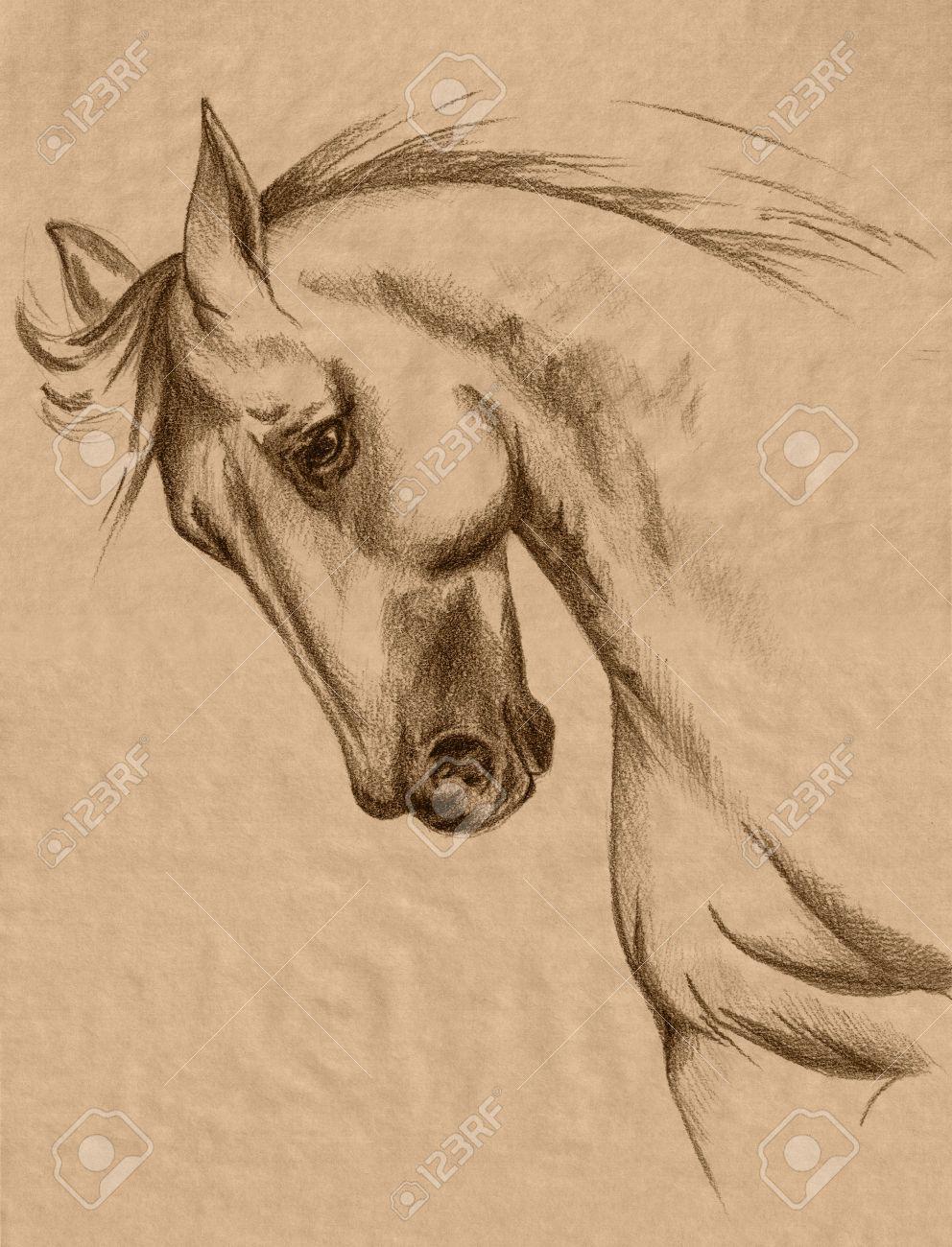 26815107-cabeza-de-caballo-de-la-sepia-a-mano-alzada-tonos-dibujo ...