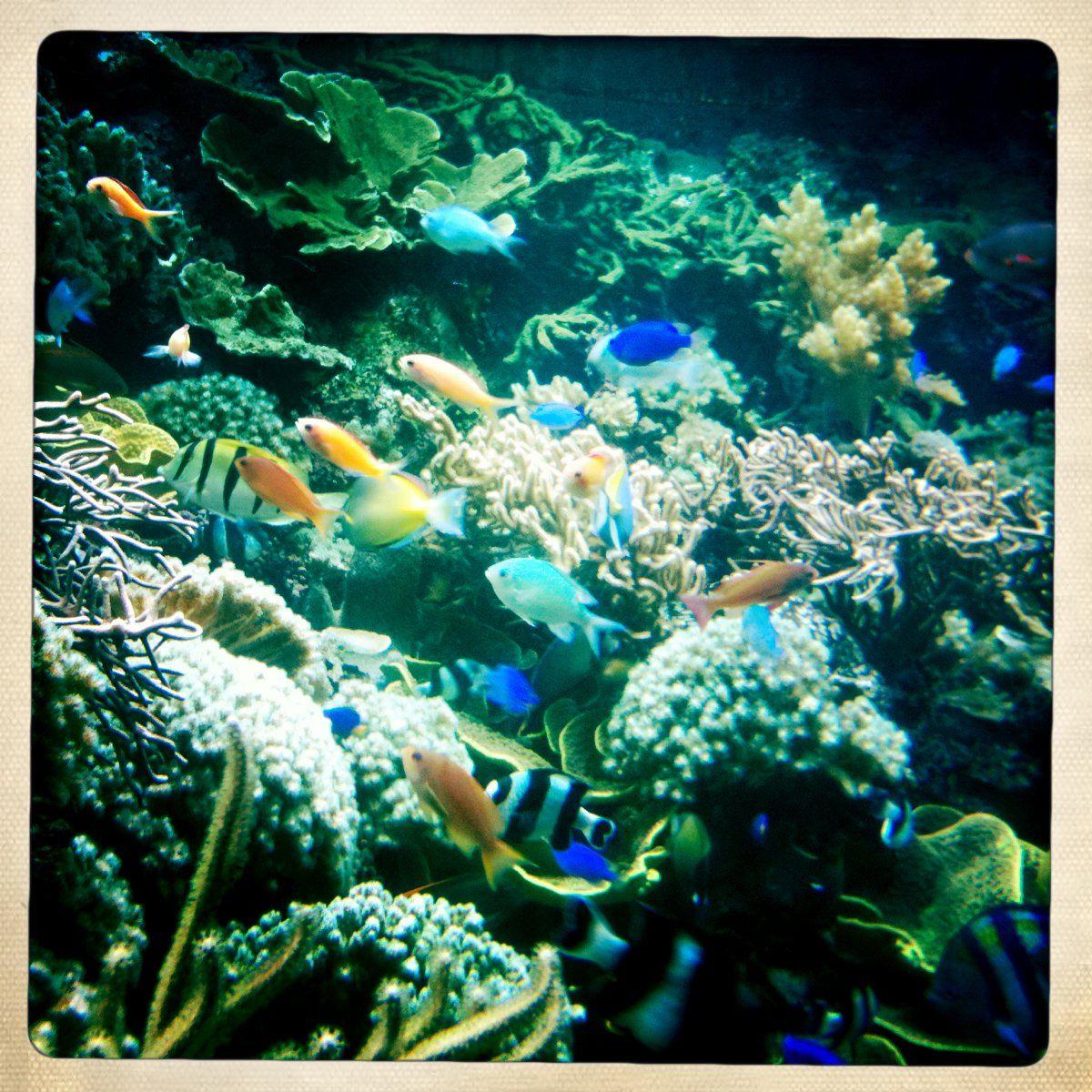 Ocean Ecosystem | 5th Ecosystems: Ocean | Pinterest