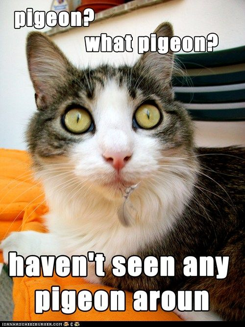 Pin by Judith Wiederkehr on Cat Chat   Funny cat memes ...