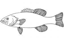 Fish Coloring Pages | Fish coloring page, Coloring pages ...